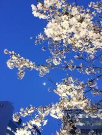 京橋の夜桜 - 某の雑記帳