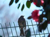 花と鳥 - 節操のない写真館