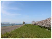 桜見ごろだ!!さくら、大、すっごいきれいだよ~ - さくらおばちゃんの趣味悠遊