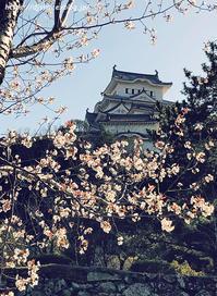 himeji-castle_20210326_1 - Shin2 Limited