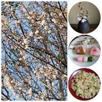 我が家の桜も咲きだして、お家花見&桜にまつわる映画色々です - 楽しく元気に暮らします