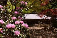 御神木と室生寺の石楠花 - 奈良・桜井の歴史と社会