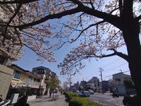 本牧の春 #1 - 神奈川徒歩々旅