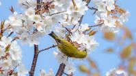 公園の野鳥 - モノクロ写真をアップする!