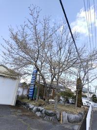 桜と、桜以外の木々の花 - 猫屋の今日も園芸日和〜ギボウシ達の庭〜