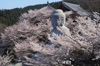 壷阪寺と本善寺の桜 - 峰さんの山あるき