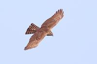 春期タカの渡り Ep3 - 野鳥の視線