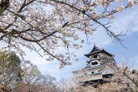 犬山城内の桜 - Digital Photo Diary