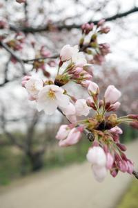 咲いたよ20210328 - Yoshi-A の写真の楽しみ