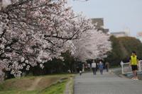 近所の桜(2021年版)その12 - 魔王の独り言 の続編