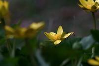 春の花 - さすらい写人