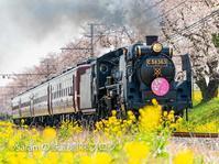 秩父鉄道SL秩父しだれ桜号 - Salamの鉄道趣味ブログ