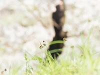 桜バックに - 瞳の記憶