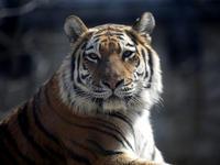 大森山動物園の通常開園が始まりました。 - 動物園放浪記