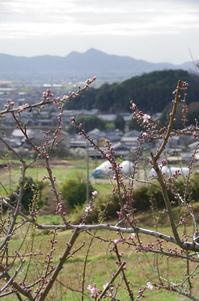 桜井市井寺池周辺 - ぶらり記録 2:奈良・大阪・・・