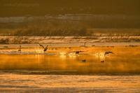 みちのく御所湖白鳥たち28 - みちのくの大自然