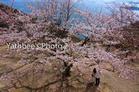 ~ 瀬戸内の春 ~2021.3.27 - Yathbee's Photo 2