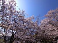 本牧の春 #2 - 神奈川徒歩々旅