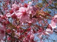 本牧の春 #3 - 神奈川徒歩々旅