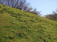本牧の春 #4 - 神奈川徒歩々旅
