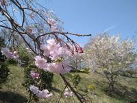 本牧の春 #5 - 神奈川徒歩々旅