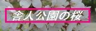桜 - 花を追いかけて