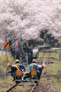 春への準備 - PTT+.