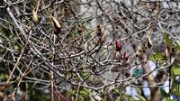 藤田八束の鉄道写真@春の訪れです。沿道に咲く花達、桜の美しさに免疫力もアップ、花から元気をもらってコロナを吹き飛ばしましょう - 藤田八束の日記