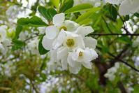何色のお花見を楽しむ - 手柄山温室植物園ブログ 『山の上から花だより』