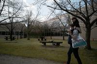 やっと冬が抜けた。 - Yoshi-A の写真の楽しみ
