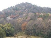 春爛漫、祐向山(いこうやま) - 山にでかける日