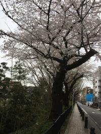 桜咲く世田谷の城めぐり - 歴史と素適なおつきあい