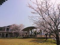 苑内 お花見日和 - ちょっこ、よってくまっし♪  特別養護老人ホーム松美苑