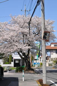 最高天気の桜! - FUTU no PHOTO