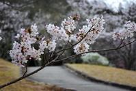 ☆桜三月散歩道☆Ⅲ - できる限り心をこめて・・Ⅳ
