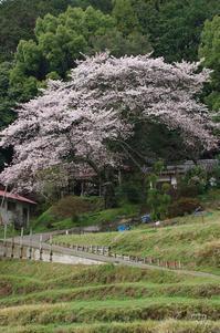 桜井市倉橋 - ぶらり記録 2:奈良・大阪・・・