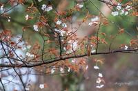 カモフラージュ - Berry's Bird