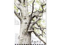 4月新緑のオークは広大な生態系 - ブルーベルの森-ブログ-英国のハンドメイド陶器と雑貨の通販