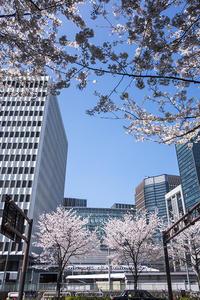 桜の咲くころ - jinsnap(weblog on a snap shot)