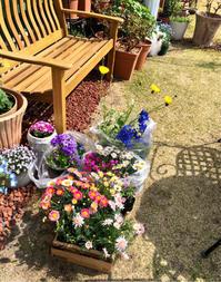 お迎した花苗達の紹介♫ - 薪割りマコのバラの庭