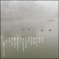 霧の朝の鴨たち - すくえあのーと