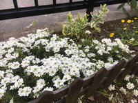 春の庭。 - とりどり日記     I love my life.