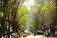 お堀の桜 - 錦眼鏡