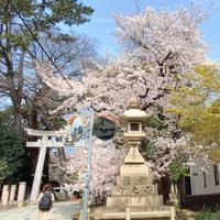 お花見散歩2 - りりぃ達といっしょ+りお+りぃ&ちゃい