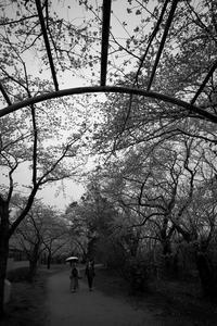 いきなり咲いちゃう、待ったなし(笑) - Yoshi-A の写真の楽しみ
