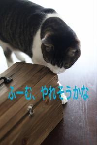 にゃんこ劇場「チャレンジ!」 - ゆきなそう  猫とガーデニングの日記