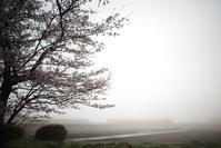 霧と黄砂 - yoshiのGR散歩