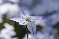 春は花撮り。 - FUTU no PHOTO