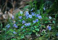春の野草 - イーハトーブ・ガーデン