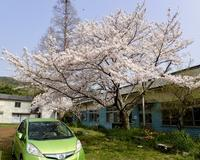 3月30日定例活動日 - 「みさき里山クラブ」活動紹介